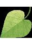 plant-biology