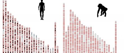 protein-factories-hidden-in-human-jumping-genes