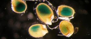 disregarded-plant-molecule-actually-treasure