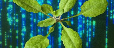 new-technologies-enable-better-ever-details-genetically-modified-plants-2