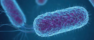 specific-bacteria-in-the-gut-prompt-mother-mice-to-neglect-their-pups